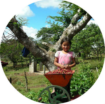 Guatemala_Sierra_Madre