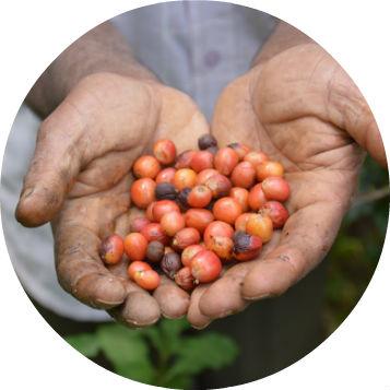 India_Balmaadi_Estate_Organic