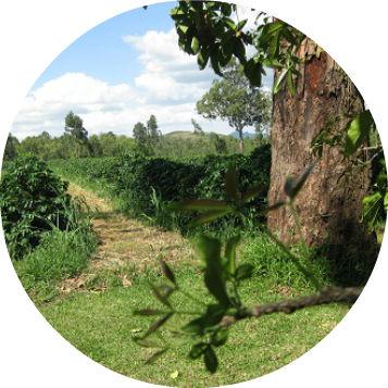 Malawi_Pamwamba
