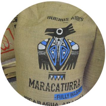 Nikaragua Maracaturra