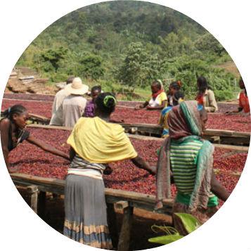 Etiopie Sidamo_cerven_web