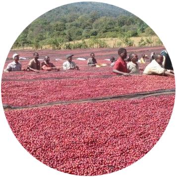 Etiopie Yirgacheffe Konga - kruh